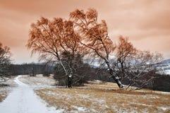 Naturaleza del árbol del invierno Foto de archivo libre de regalías