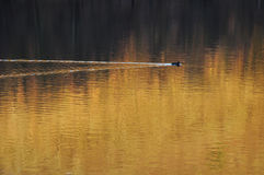 Naturaleza del agua Fotografía de archivo libre de regalías