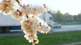 Naturaleza del aparcamiento del camino de la flor almacen de video