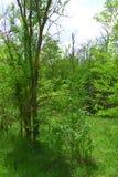 Naturaleza del bosque Foto de archivo libre de regalías