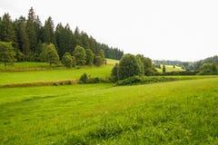 naturaleza del bosque negro, Alemania Imagen de archivo libre de regalías