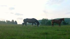 Naturaleza del caballo que camina almacen de video