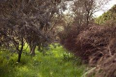 Naturaleza del campo de Tirana Albania Foto de archivo