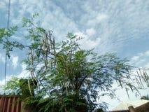 Naturaleza del cielo del árbol imagen de archivo libre de regalías