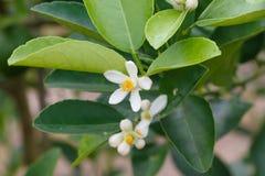 Naturaleza del detalle del primer de la flor blanca Fotos de archivo libres de regalías