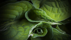 Naturaleza del esquema de la gotita de la col verde Fotos de archivo