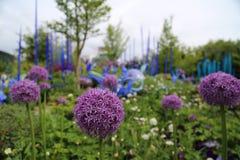 Naturaleza del flor fotografía de archivo libre de regalías