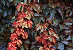Naturaleza del fondo Foto de archivo libre de regalías