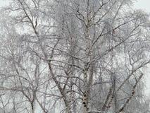 naturaleza del Hada-cuento en un bosque del invierno en una imagen blanco y negro Imágenes de archivo libres de regalías