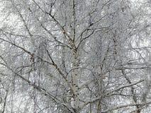naturaleza del Hada-cuento en un bosque del invierno en una imagen blanco y negro Fotos de archivo