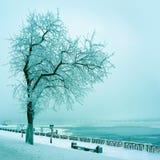 Naturaleza del invierno, árbol solo en la costa del río Imagen de archivo libre de regalías