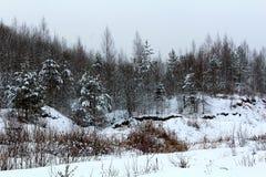 Naturaleza del invierno, árboles nevados y arbustos Un ejemplo excelente del hábitat natural de animales salvajes foto de archivo libre de regalías