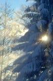 Naturaleza del invierno imagen de archivo libre de regalías