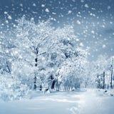 Naturaleza del invierno Fotografía de archivo libre de regalías