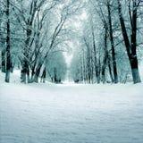 Naturaleza del invierno, callejón en parque Imagen de archivo