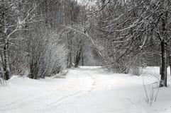 Naturaleza del invierno, callejón en parque Imágenes de archivo libres de regalías