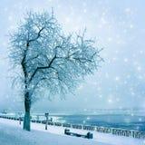 Naturaleza del invierno, callejón en parque Fotos de archivo libres de regalías