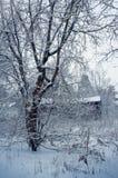 Naturaleza del invierno, casa vieja en bosque Imagen de archivo libre de regalías