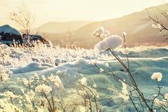 Naturaleza del invierno en la puesta del sol Imágenes de archivo libres de regalías
