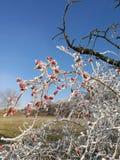 Naturaleza del invierno en República Checa Imagen de archivo libre de regalías