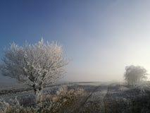 Naturaleza del invierno en República Checa Imagen de archivo