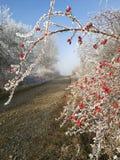 Naturaleza del invierno en República Checa Fotos de archivo