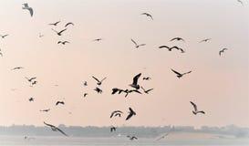 Naturaleza del mar, la multitud de las gaviotas que vuelan sobre el mar en busca de pescados en una mañana brumosa ilustración del vector