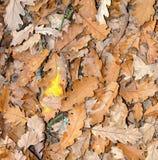 Naturaleza del otoño Foto de archivo libre de regalías