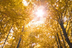 Naturaleza del otoño Imágenes de archivo libres de regalías