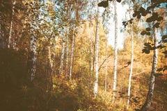Naturaleza del otoño en el bosque Imágenes de archivo libres de regalías