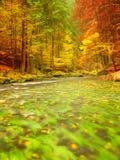 Naturaleza del otoño Río de la montaña con bajo del agua, hojas coloridas en bosque Fotos de archivo