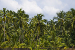 Naturaleza del paisaje de la India Fotografía de archivo