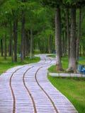 Naturaleza del paisaje El parque de la ciudad Árboles de cedro Foto de archivo libre de regalías