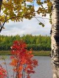 Naturaleza del paisaje Otoño Árboles con las hojas amarillas en el backgr Fotografía de archivo