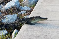 Naturaleza del parque de estado del Huntington Beach Fotografía de archivo