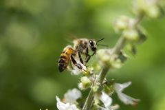 Naturaleza del verde del insecto de la flor de la abeja al aire libre Imágenes de archivo libres de regalías