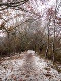 naturaleza desnuda de la escena de las ramas de la trayectoria de bosque del país del invierno Fotografía de archivo