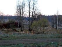 Naturaleza despejada, tarde de la primavera de abril foto de archivo