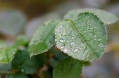 Naturaleza después de la lluvia Foto de archivo