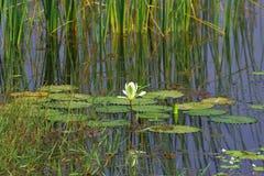 Naturaleza en agua Fotografía de archivo
