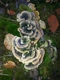 Naturaleza en bosque salvaje en Rumania Imagen de archivo