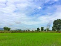 Naturaleza en campo y cielo azul imagenes de archivo