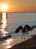 Naturaleza en el amanecer Fotos de archivo