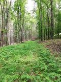 Naturaleza en el bosque fotografía de archivo libre de regalías