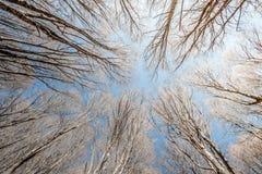 Naturaleza en el cielo Fotos de archivo libres de regalías