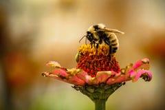 Naturaleza en el trabajo Fotos de archivo libres de regalías