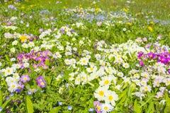 Naturaleza en la floración Fotografía de archivo