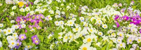 Naturaleza en la floración Imágenes de archivo libres de regalías