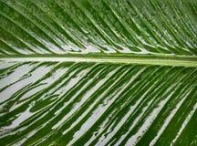 Naturaleza en la lluvia Imagen de archivo