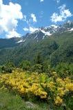 Naturaleza en las montañas Fotos de archivo libres de regalías